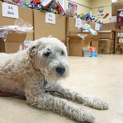 a cute dog in front of large boxes filled with donations